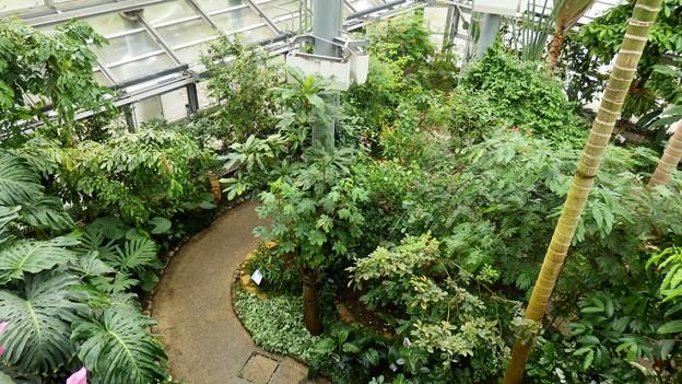 トロピカルガーデン(温室)