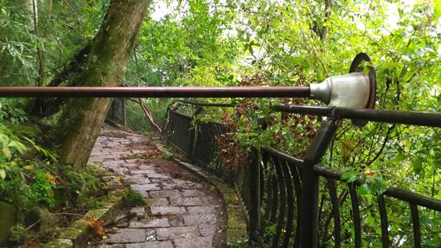 箱根神社への道