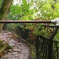 Photos: 箱根神社への道
