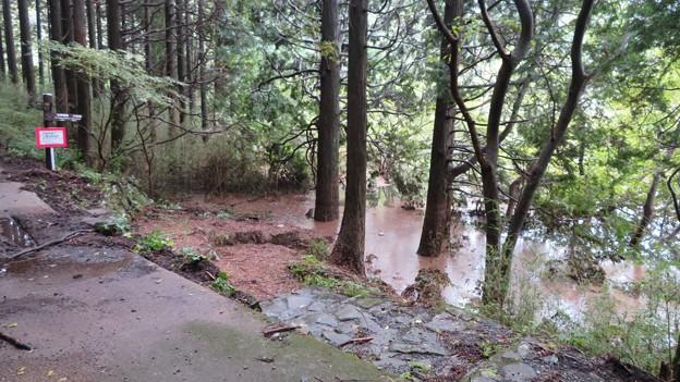 水位上昇中のお玉ヶ池