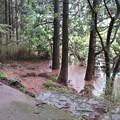 Photos: 水位上昇中のお玉ヶ池