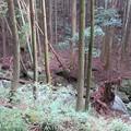 Photos: 玉川の倒木