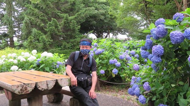 紫陽花に囲まれたベンチで休憩中