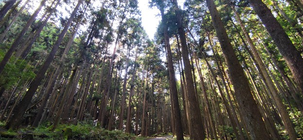 二の足林道