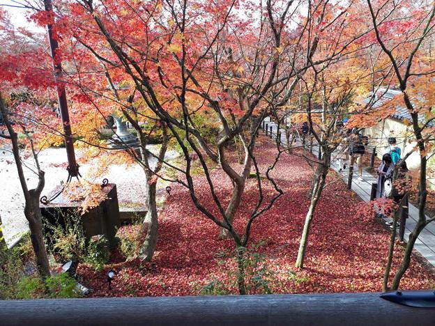 永観堂の秋