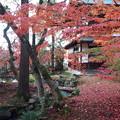 Photos: 永観堂の秋