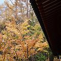 ある秋の日の景色!?