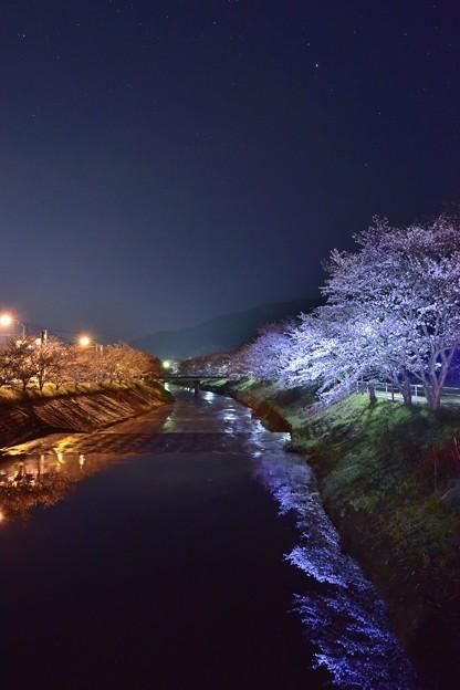 奈良桜 2