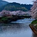 Photos: 奈良桜 5
