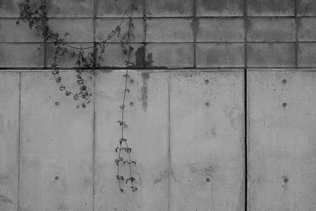 Photos: 壁