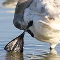 幼鳥の足裏