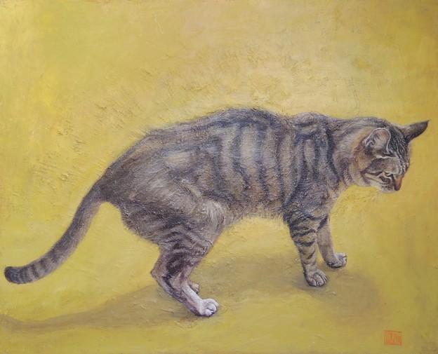 cat3.1