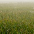 Photos: 朝靄に包まれて