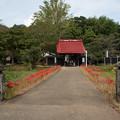 Photos: 彼岸花の道