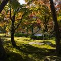 Photos: 永観堂の紅葉