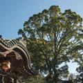 Photos: 筑波山神社 拝殿