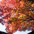 Photos: 筑波山神社の紅葉
