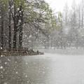 Photos: 春の雪