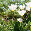 Photos: 輝いて咲く