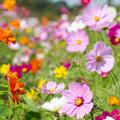 Photos: 花から花へ