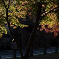 Photos: 夕照を受けて