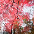 Photos: 赤い天蓋