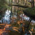Photos: 放生池