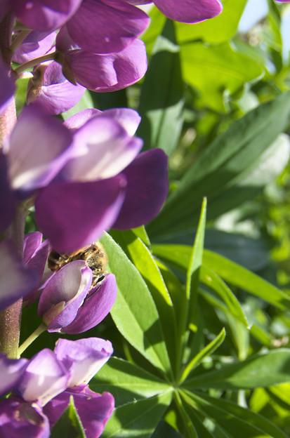 Photos: 花の陰から