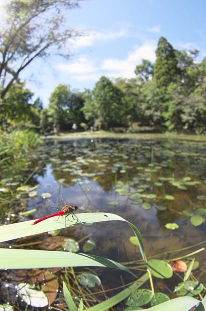 弁天池の秋