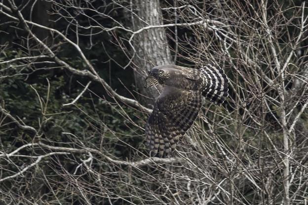 写真: 森の忍者背打ち