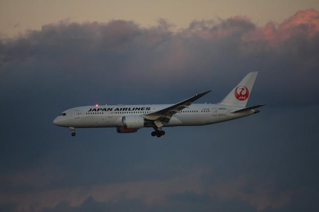 日本航空 JAL ボーイング787-8 JA833J