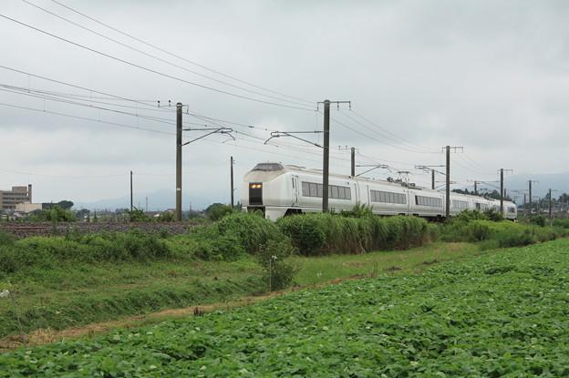 夏の畑を行く651系K105編成急行ロックインジャパン号