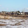 積雪の中を行くEH500コンテナ貨物列車 (4)