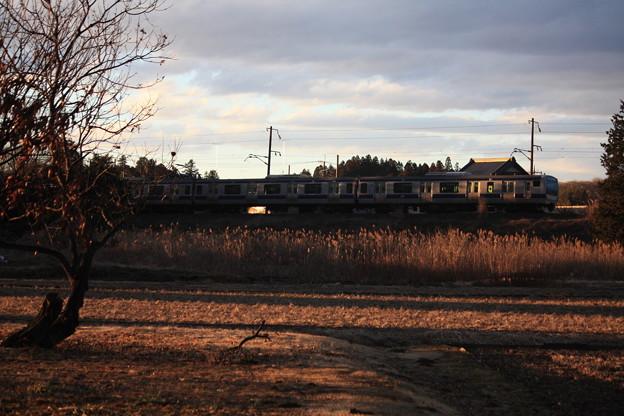 夕陽を浴びながら田園風景を行く水戸線E531系 (4)