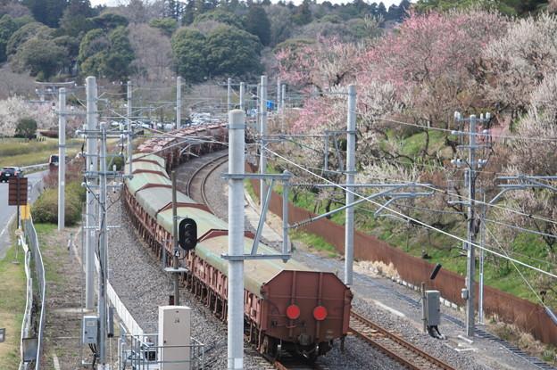 偕楽園駅を通過する5094レ安中貨物 後追い (2)