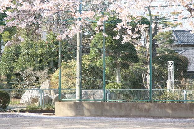 友部駅前児童公園の桜 20180331_26