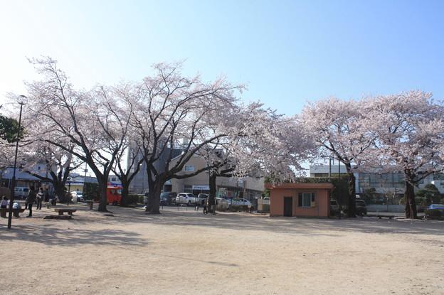 友部駅前児童公園の桜 20180331_28