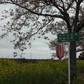 Photos: 北真岡の桜・菜の花の横を通過するSLもおか 6002レ C12 66+50系客車