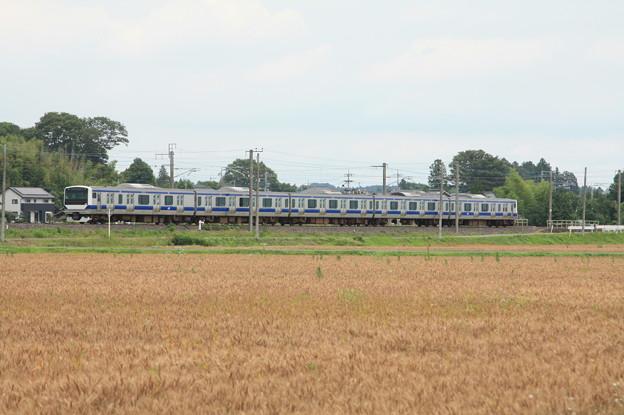 麦畑を行くE531系 (4)