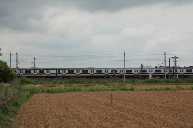 写真: 麦畑を行くE531系 (6)