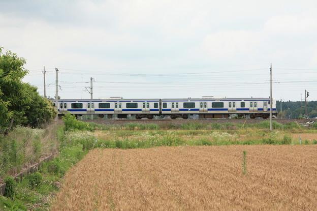 麦畑を行くE531系 (7)