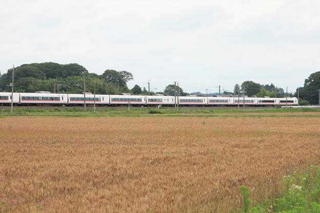 写真: 麦畑を行くE657系 (14)