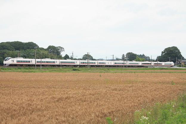 写真: 麦畑を行くE657系 (15)