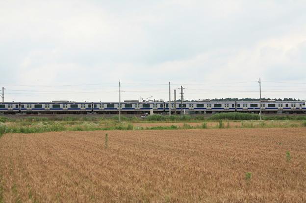 麦畑を行くE531系 (11)