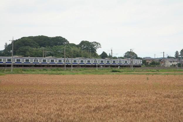 麦畑を行くE531系 (12)