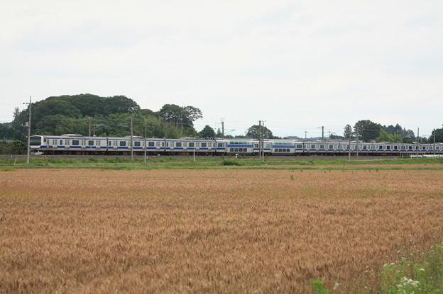 麦畑を行くE531系 (13)