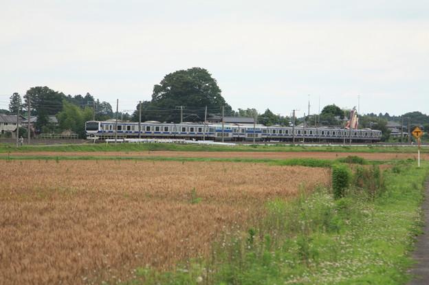 麦畑を行くE531系 (14)