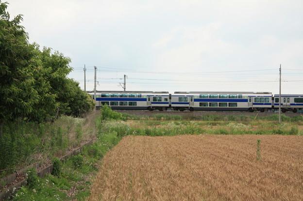 写真: 麦畑を行くE531系 (16)