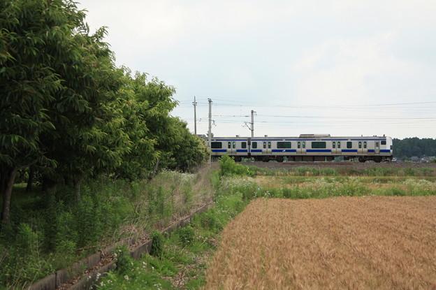 麦畑を行くE531系 (17)