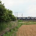 写真: 麦畑を行くE531系 (17)